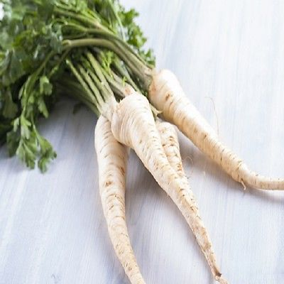 Root Parsley Hamburg - Min 3000 seeds - Vegetables / Fruits